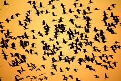 Point Stuart Sunset Flock