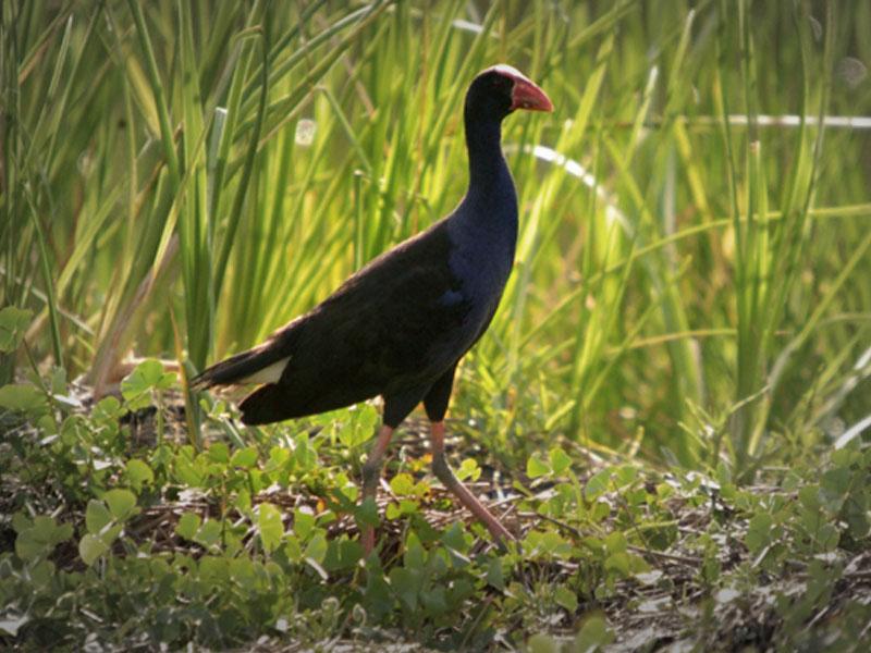 Wetland Birdlife