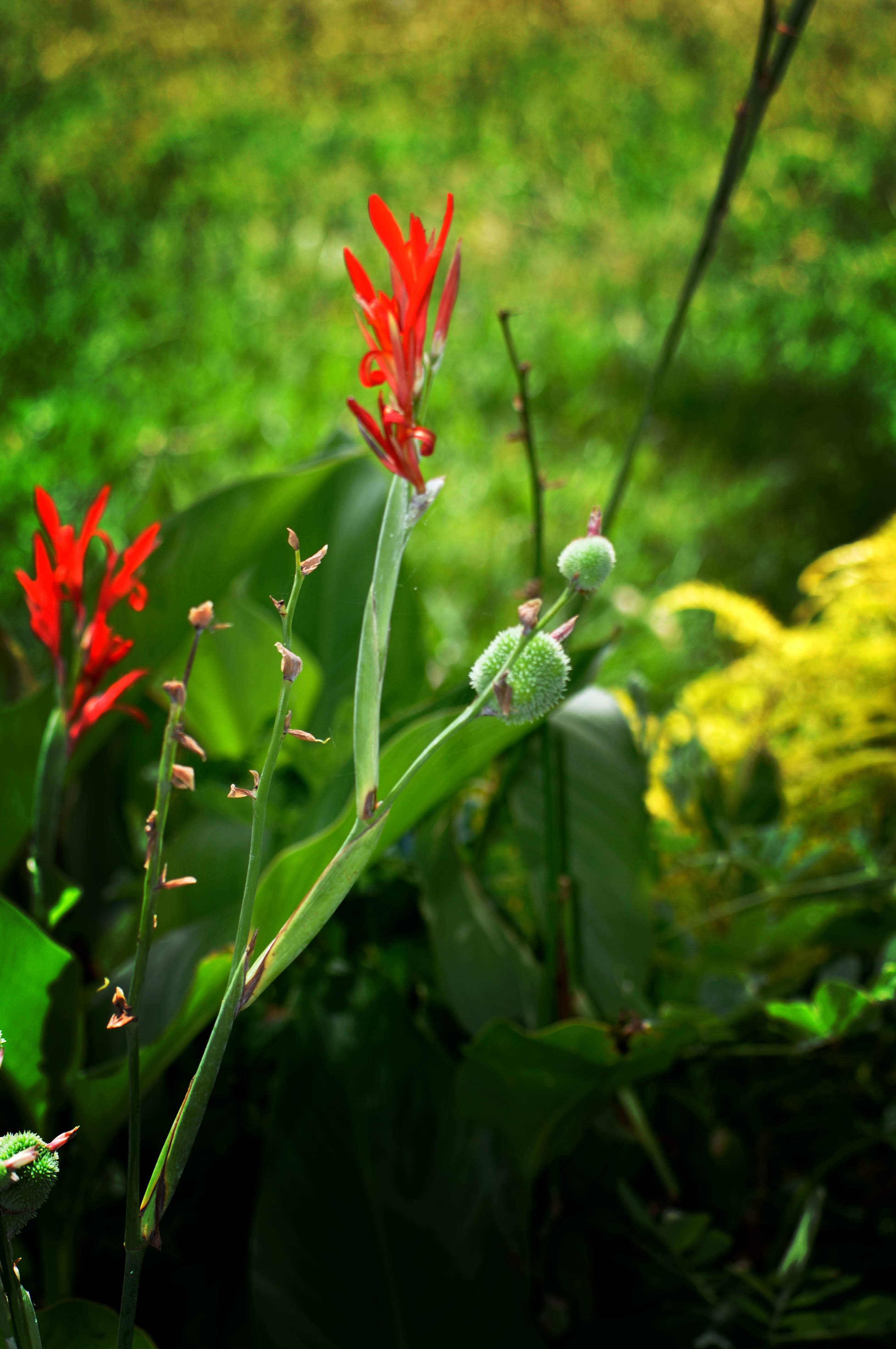 Tanna Flower