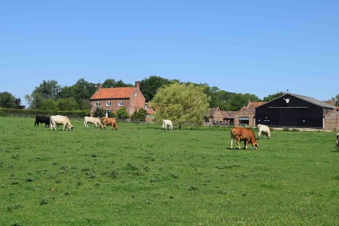 Rear meadow