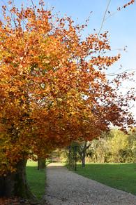 Gardens in autumn.jpg