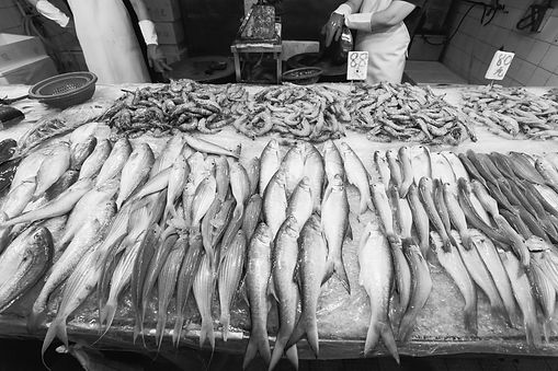 Fresh fish lined up on a bed of ice