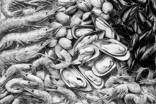 Black and white photo of fresh, raw shrimp, clam shells, and opened oysters