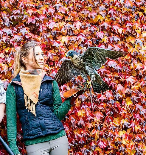 Jess Craven Falcon