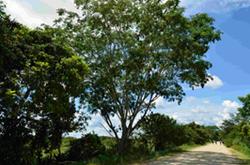 Árbol en el camino