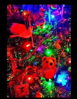Magic Bear Christmas