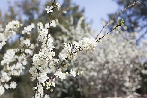 Butterfly Spring.jpg