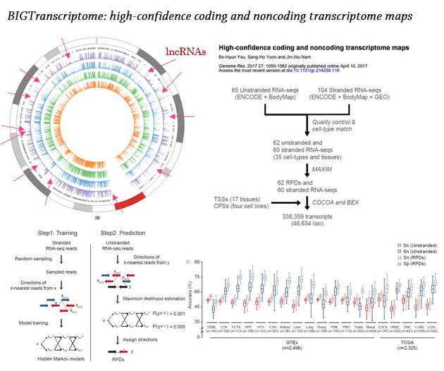 BIGTranscriptome.JPG