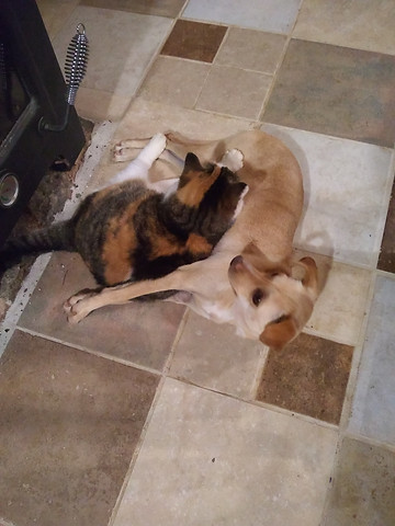Dog and cat warm up together by the wood stove