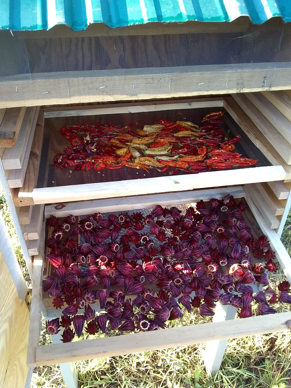 Inside a home-made solar dehydrator