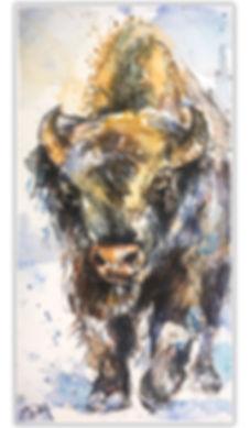 SDrey Buffalo #4.jpg