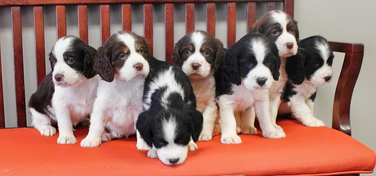 Bella Litter Pups Only.png