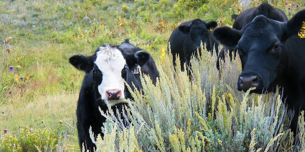Western Colorado Cattle and Forage Grower Update