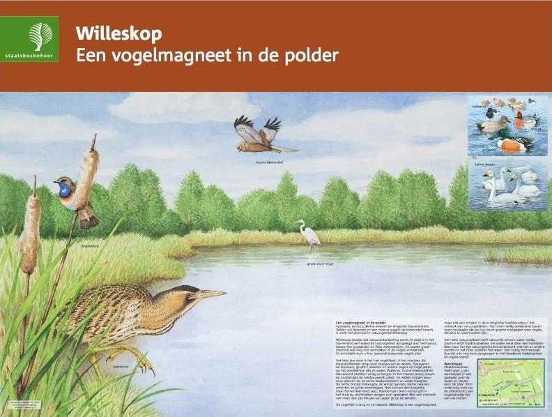 Willeskop