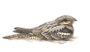 pepijn hof natuur illustratie & fotografie