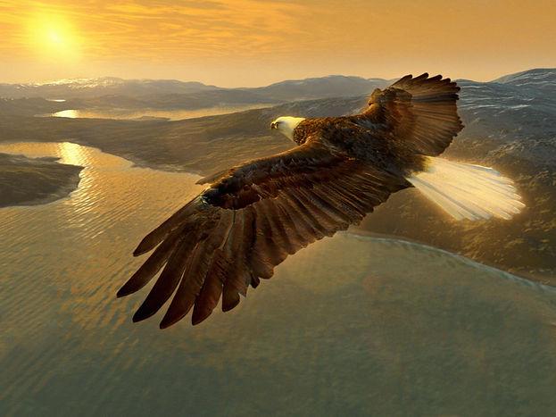aguia_voando.jpg