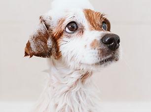 Dog Grooming .jpg