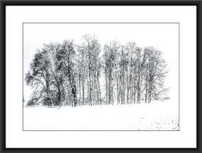 Blenheim Woodland I - £75