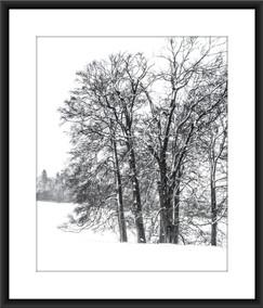 Blenheim Woodland III - £75