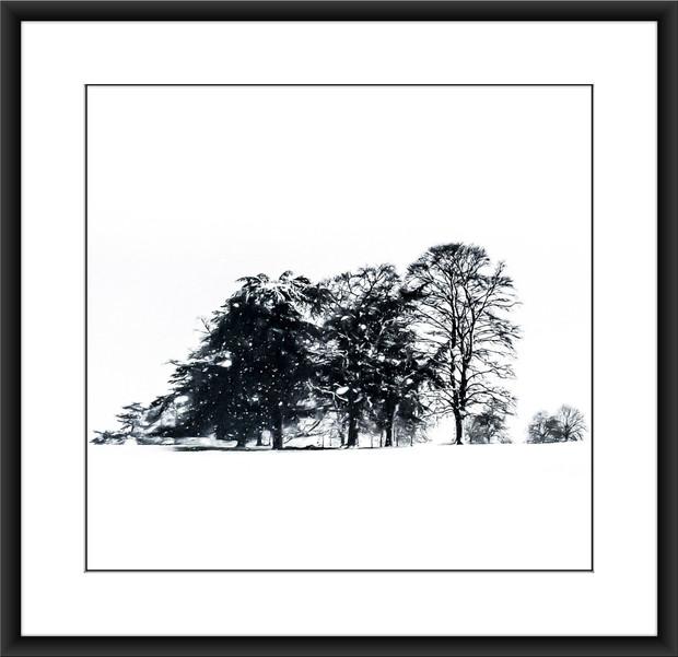 Winter Trees I - £75