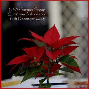 01_pointsettia_DSC9162_Christmas_text re