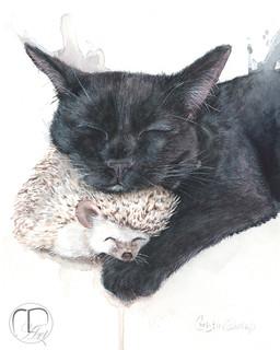 Salem's prickly comfort.jpg