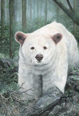 Princess Royal Island Spirit Bear