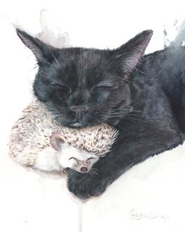 Salem's prickly comfort