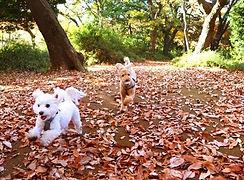犬と森_R.jpg