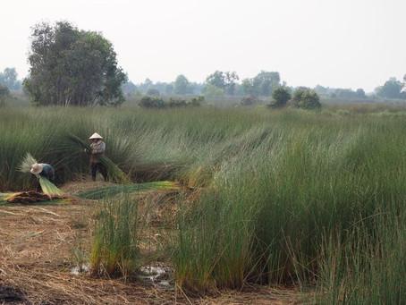 ベトナム農村支援NGO団体「VIRI」と協業を発表しました。