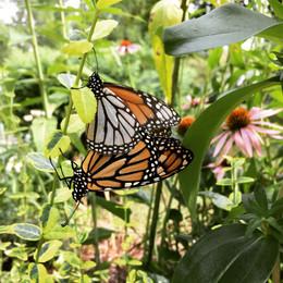 Butterfly lovin'