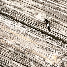 Dragonfly at Lake Owen, northern Wisconsin