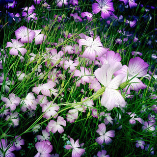 Wildflowers in France