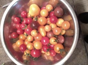 Cherry tomato haul!