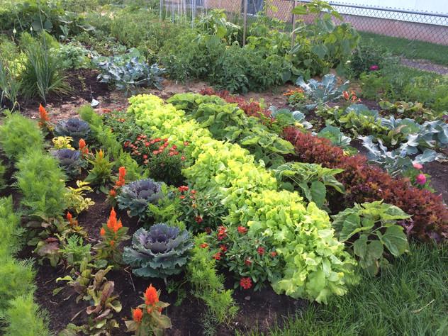 Most envied garden plot (not mine)