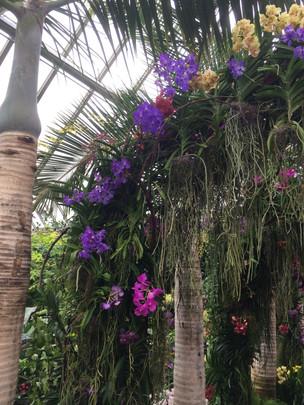Chicago Botanical Garden Orchid show 2017