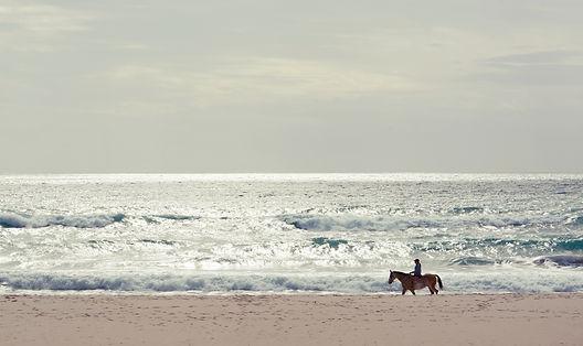 2018 10 15 Horse on beach Spain.jpg