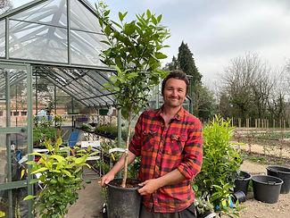 Dan Greenhouse Tree