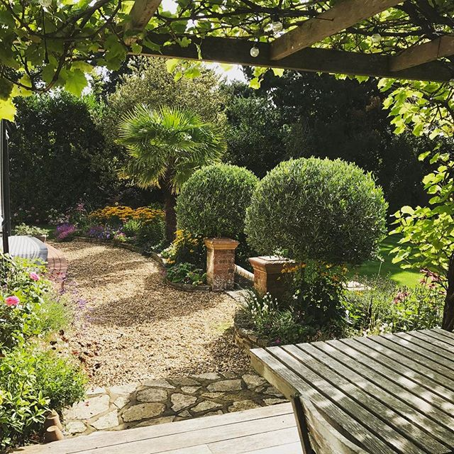 Cool little spot in the garden with a slight Italian vibe! #pergola #grapevine #olivetree #topiary #