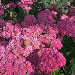 Sun is shining! Fingers crossed for an Indian summer! #savethebees #gardening #flowerpower #bees #se