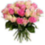 rose_bianche_e rosa1_250px.png