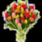 tulipani_misti.png