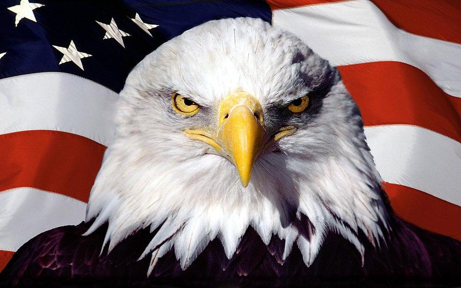 eagle on flag.jpg