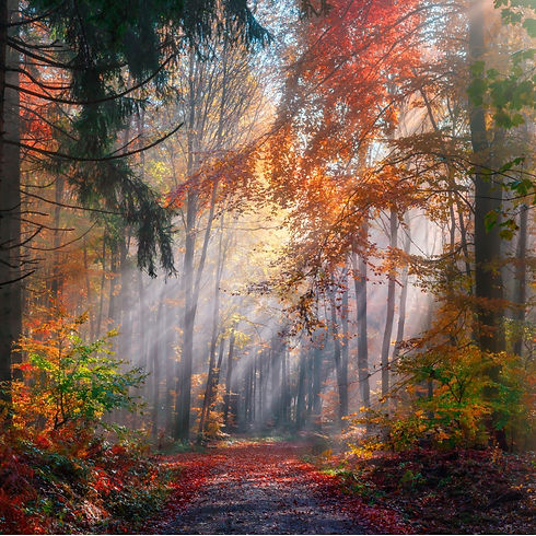 magical-autumn-scenery-in-a-misty-forest-picture-id1272949763 (3).jpg