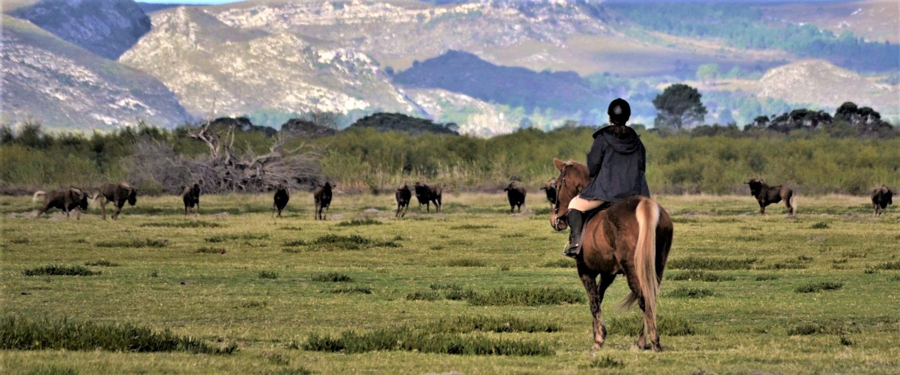 Horse Safari at Duinefontein