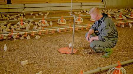 Poultry solutions - Animal weighing - He