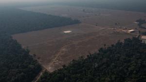 Inteligência Artificial contra o desmatamento da Amazônia