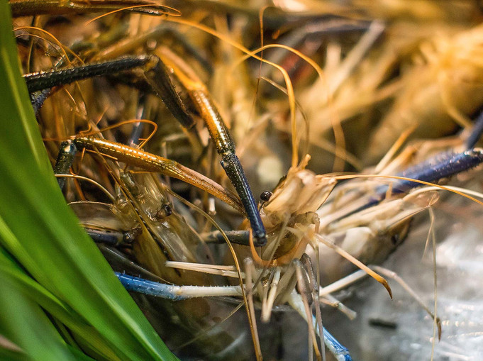 crab in marsh