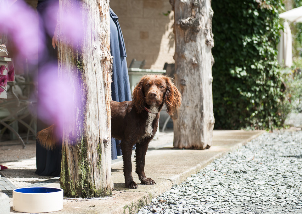 Dog friendly wedding venues in Devon