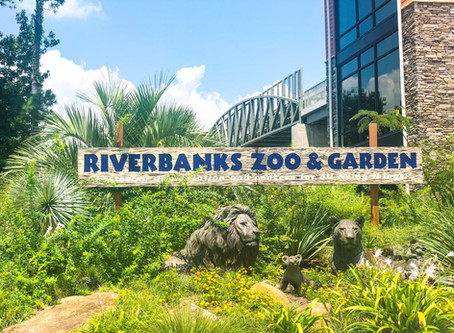 Visit the Zoo During Quarantine | Riverbanks Zoo and Garden
